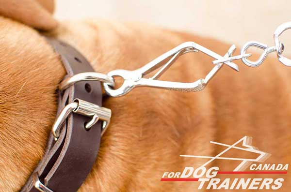Leather Collar of Classic Design