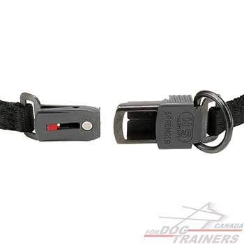 Click lock buckle on curogan dog pinch collar for behavior control