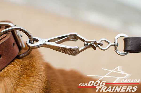 D-Ring on Leather Dog Collar for Leash Fastening