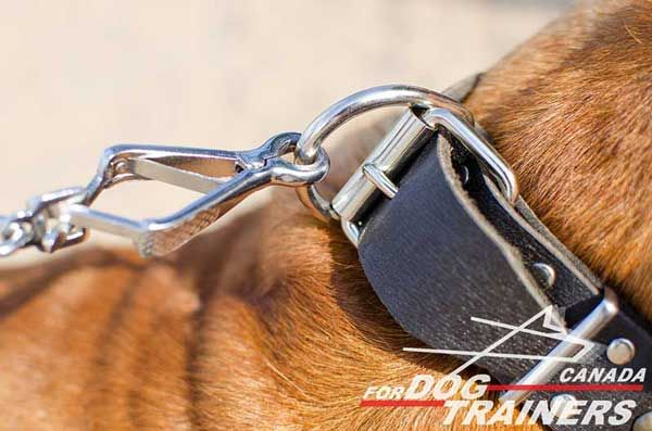 D-Ring for Leash on Leather Collar