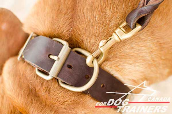 D-Ring on Leather Collar for Dog Leashing