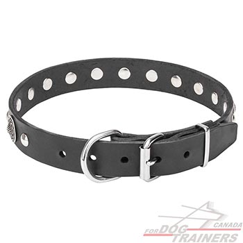 Studded Leather Dog Collar with Chrome Plated Hardware