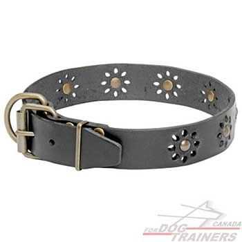 Dog Leather Collar with Brass Fittings