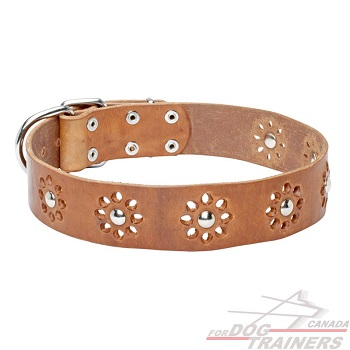 Dog leather collar tan color