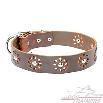 Brown leather collar for dog walking in style
