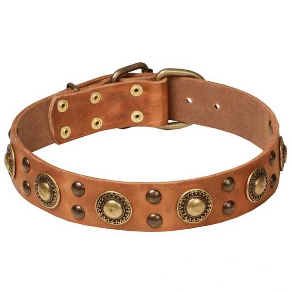 Tan Dog Walking Collar with Stylish Brass Decorations