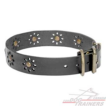 Beautiful Leather Dog Collar for Walking