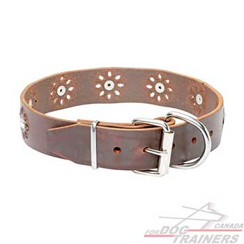 Nickel plated hardware on dog brown leather collar