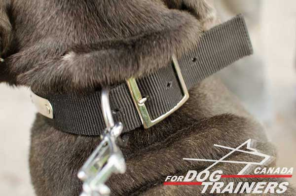 Dog Nylon Collar with Rust-proof D-ring