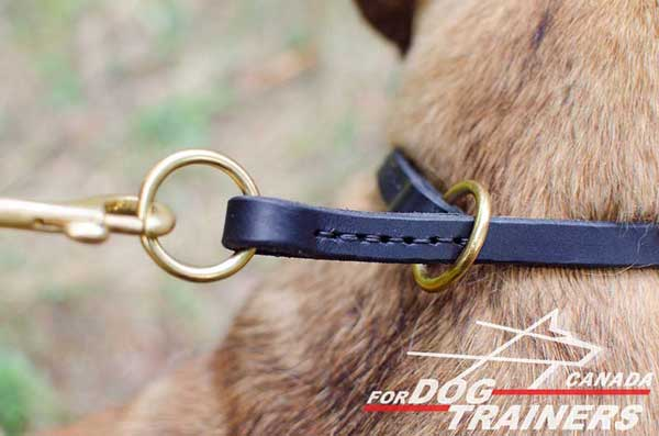 Dog choke collar with attachment for training