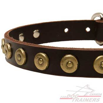 Dog collar decorated with brass circles