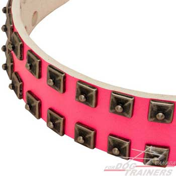 Decorated dog collar with  nickle-plated pyramids