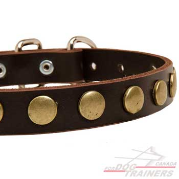 Dog collar decorated with vintage-looking studs
