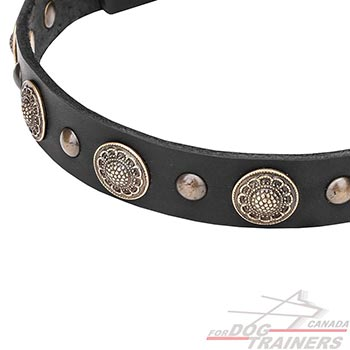 Leather dog collar with brass rustproof fittings