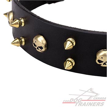 Brass skulls and spikes on elegant leather dog collar