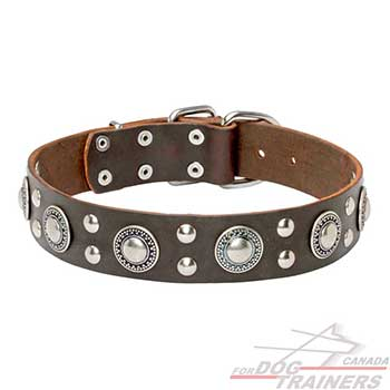 Reliable brown leather dog collar