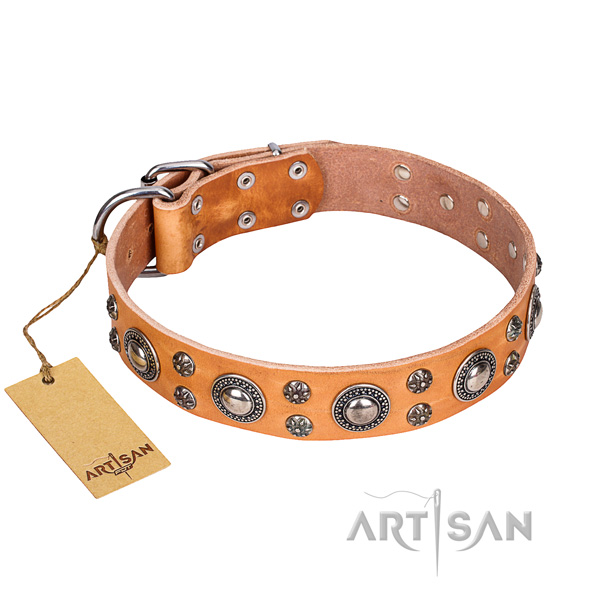 Unique leather dog collar for daily use