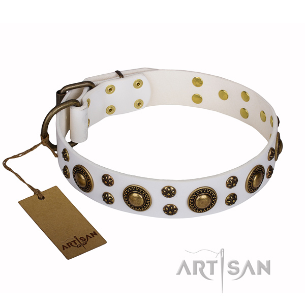 Everyday use full grain natural leather collar with embellishments for your dog