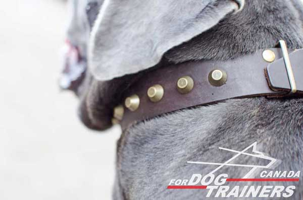 Leather dog collar with rust-proof fittings