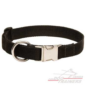 Dog collar of nylon for all-weather training