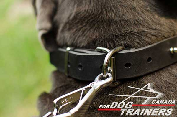 Dog collar with D-ring for on-lead training