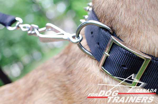 Dog collar with strong D-ring and buckle