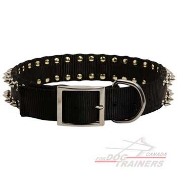 Dog collar with rust resistent cover on hardware