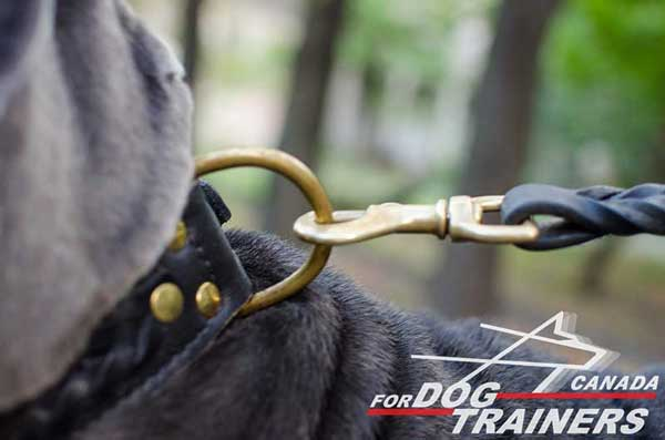 Braided leather dog collar with rust-proof fittings