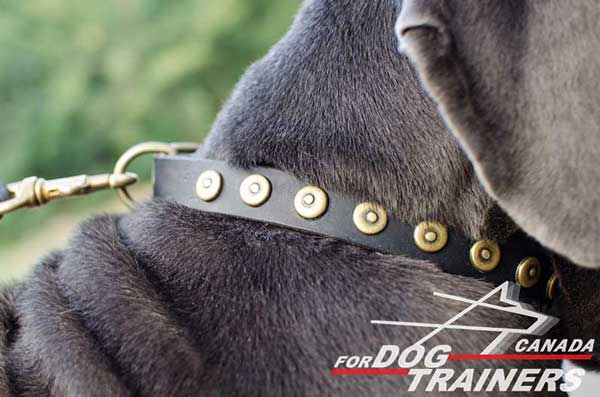 Collar for dogs decorated with vintage studs