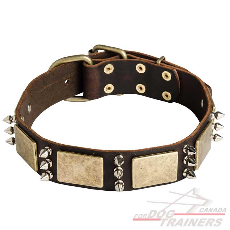 Spiked Dog Collars Canada