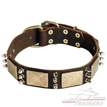 Leather dog collar with plates and spikes