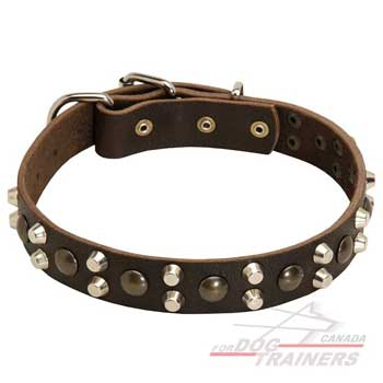 Leather dog collar with brass and nickel studs