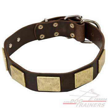 Leather dog collar for stylish walking