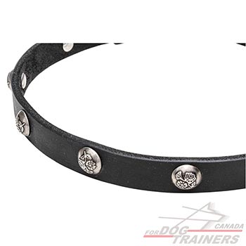 Studs with Engraved Leaves on Walking Leather Dog Collar