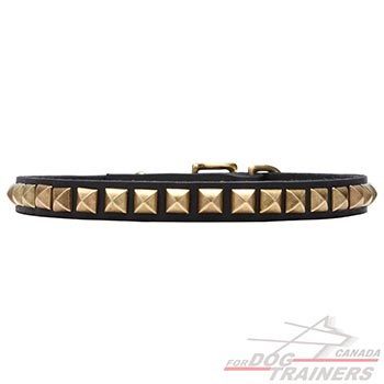 Collar for Dogs with Shining Brass Studs
