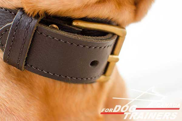 Leather Collar for Dog with Adjustable Brass Buckle