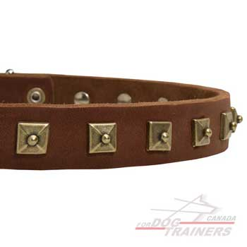 Studded Leather Collar for Canine Walking