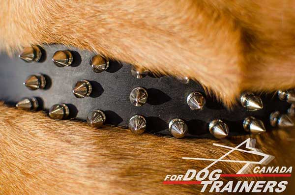 Sturdy Leather Canine Collar with Silver Color Spiked Decoration