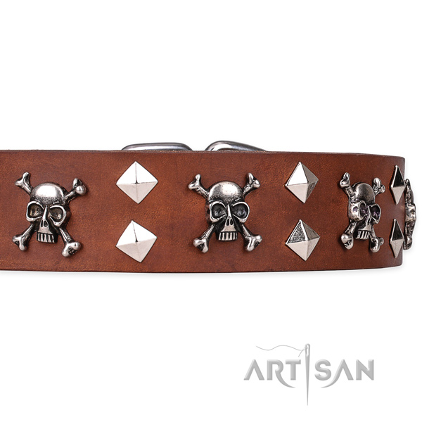Daily leather dog collar with exceptional decorations
