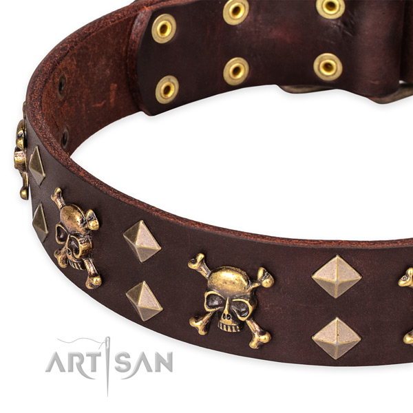 Day-to-day leather dog collar with remarkable embellishments
