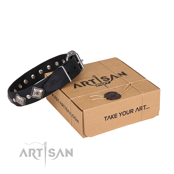 Casual style leather dog collar with astonishing embellishments