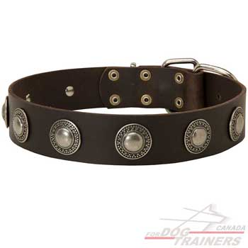 Dog leather wide collar with brass decoration