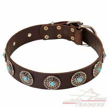 Dog leather collar with silver-like decoration