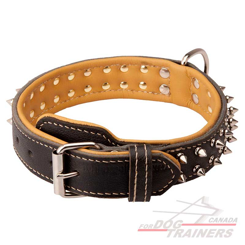 Fancy Dog Collars Canada