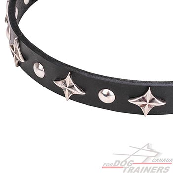 Durable dog collar with chrome plated stars and studs
