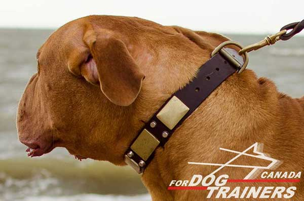 Leather Dogue de Bordeaux Collar for Fashionable Appearance