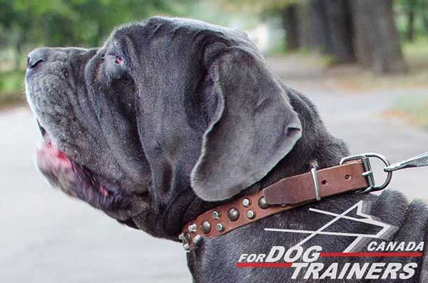 Mastino Napoletano Leather Collar with Studs