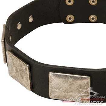 Nickel plates on dog leather collar