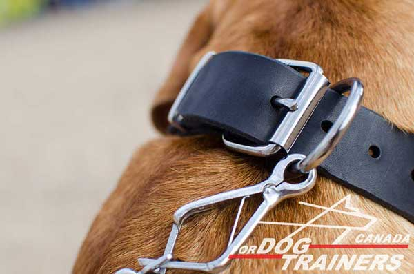 Nickel Ring for Leash Connection and Buckle