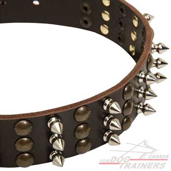 Nickel spikes and brass studs on leather dog collar